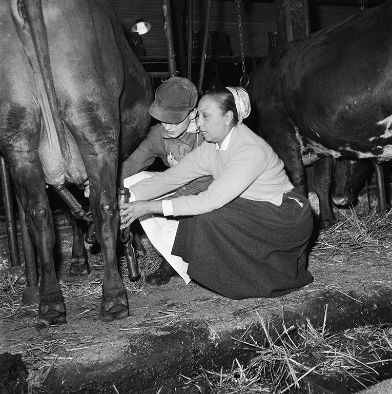 Svartvitt fotografi på två kvinnor som mjölkar en ko